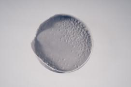 Diatomeae 1