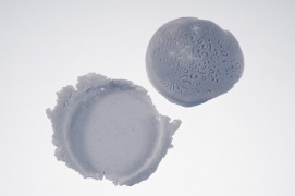 Diatomeae 4