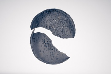 Diatomeae 5